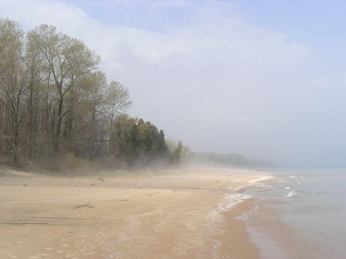 树林海滩大海风景风光图片