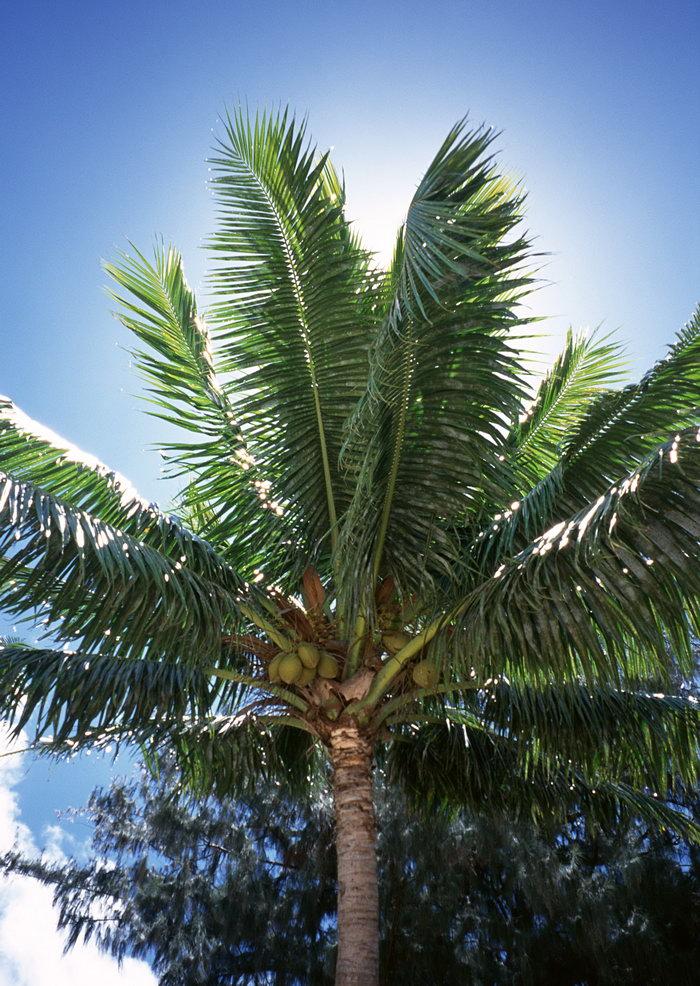 椰子树大海风景风光图片