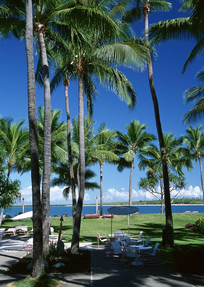 海滩椰树大海风景风光图片