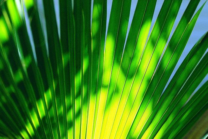 海边植物大海风景风光图片