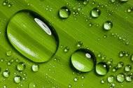 精灵剔透的水滴02图片
