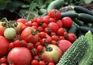 番茄苦瓜黄瓜图片