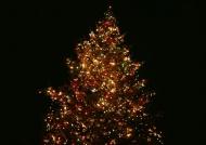 霓虹灯圣诞树图片